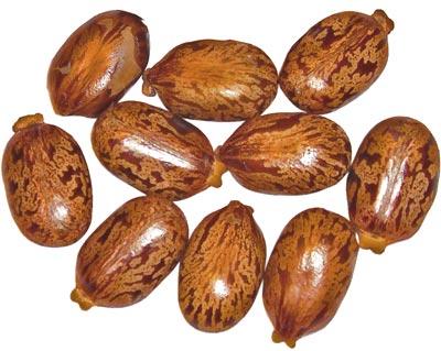 Huile ricin cheveux est extraite des graines du ricin commun