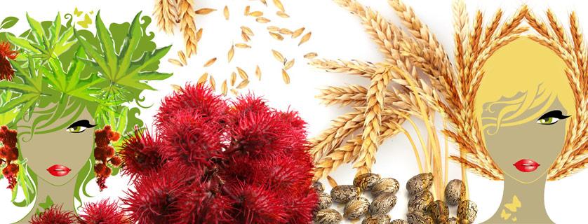 Huile de ricin (huile de castor) et huile de germe de blé